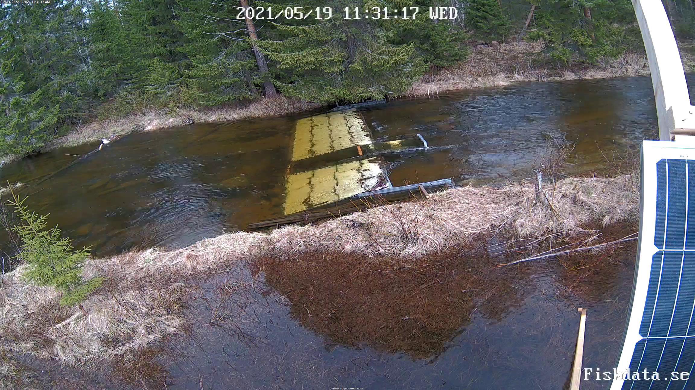 En fiskräknarinstallation som överblickas av en webbkamera